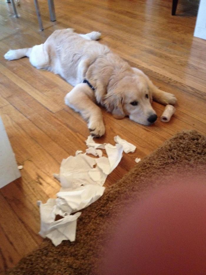 Вот и нет вашей жесткой туалетной бумаги!