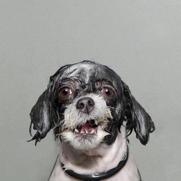 Мокрый собаки Софи Гаманд