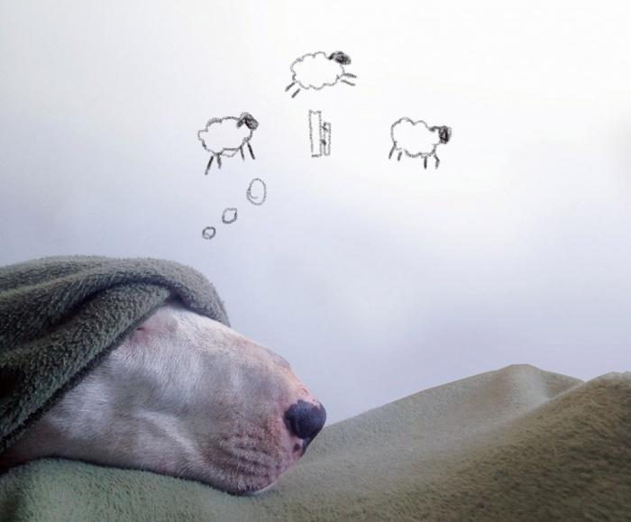 Что снится Джимми?