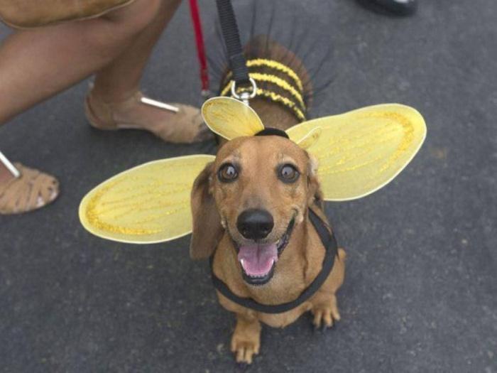 Пчелка!