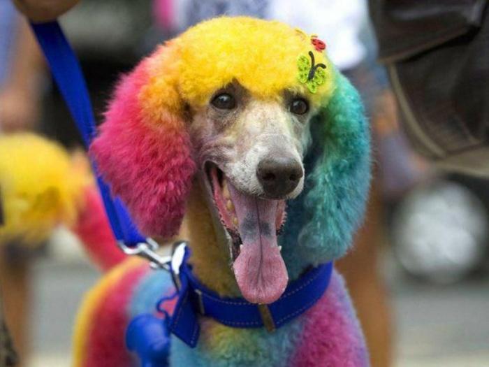 Все цвета радуги для веселья!