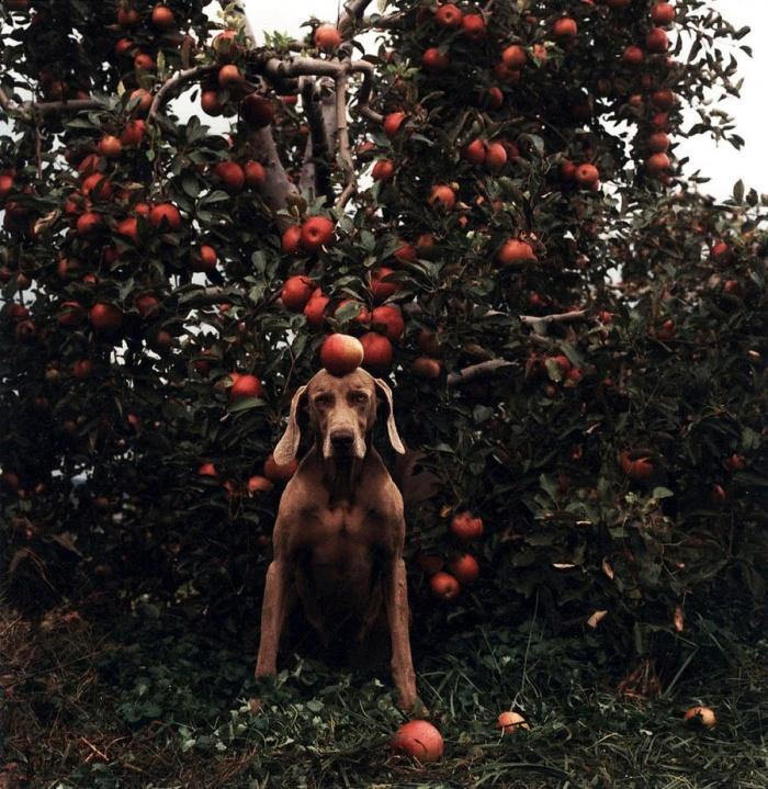 Есть кони в яблоках. А это собака в яблоках!