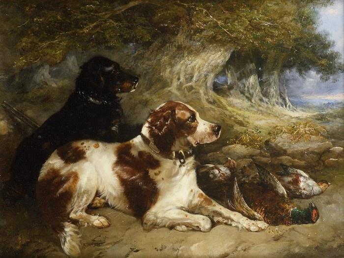 Охотничьи собаки на природе