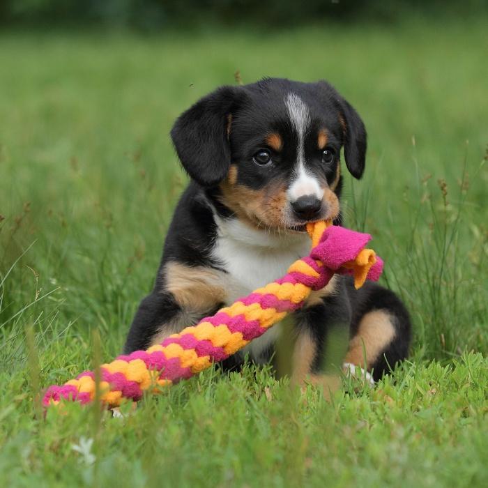 Игрушка для собак из флиса Плетенка прямая