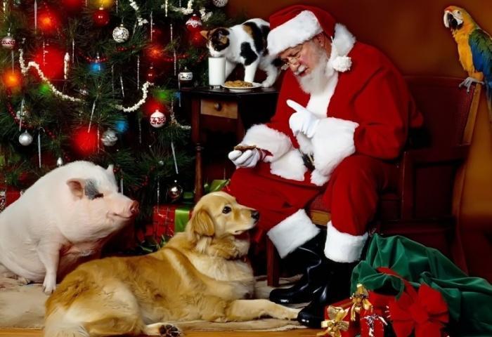 Наставления Санта Клауса!
