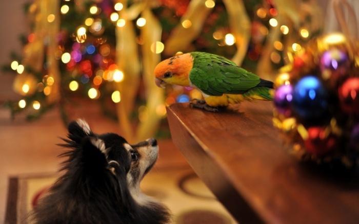 Теперь и попугай с нами!