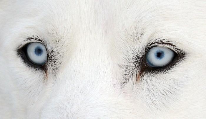 Что принесет нам собака во сне