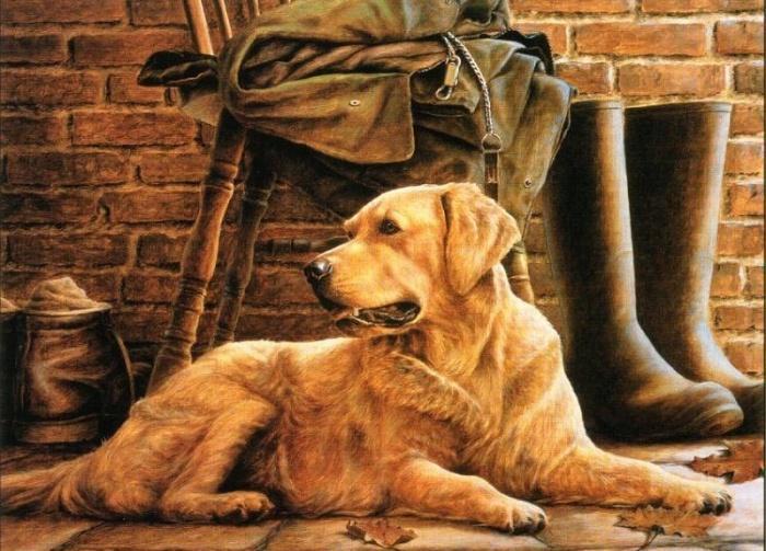 Кевин Дэниэл.  Рыжий пес
