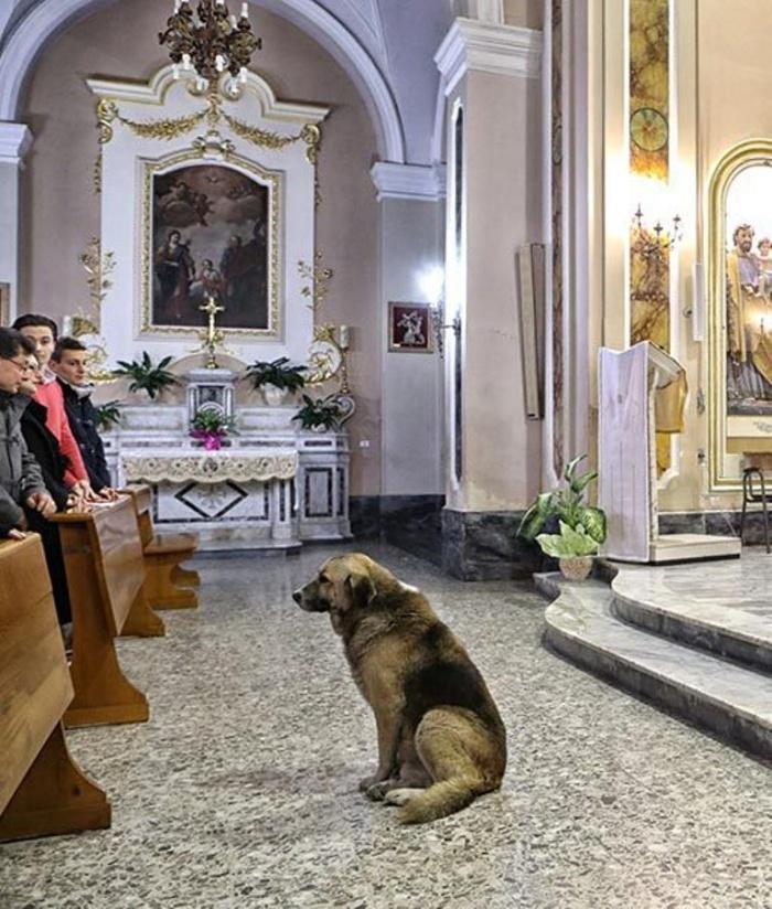 Верный пес Томми в церкви