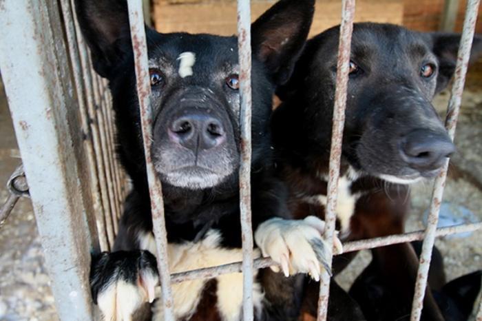 Собачий приют в Перми