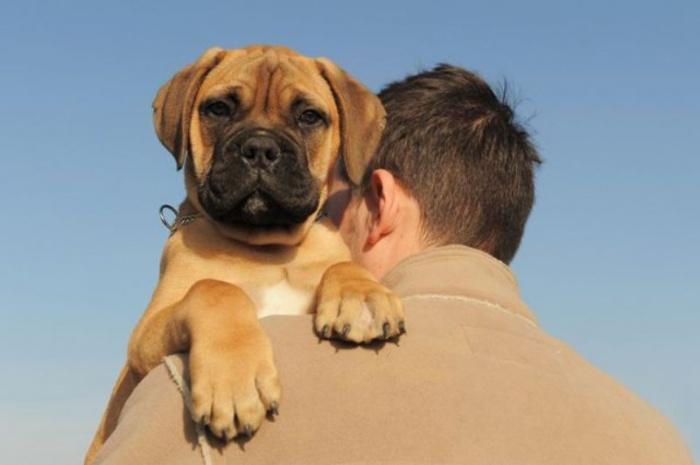 Собака спасла жизни своим лаем!