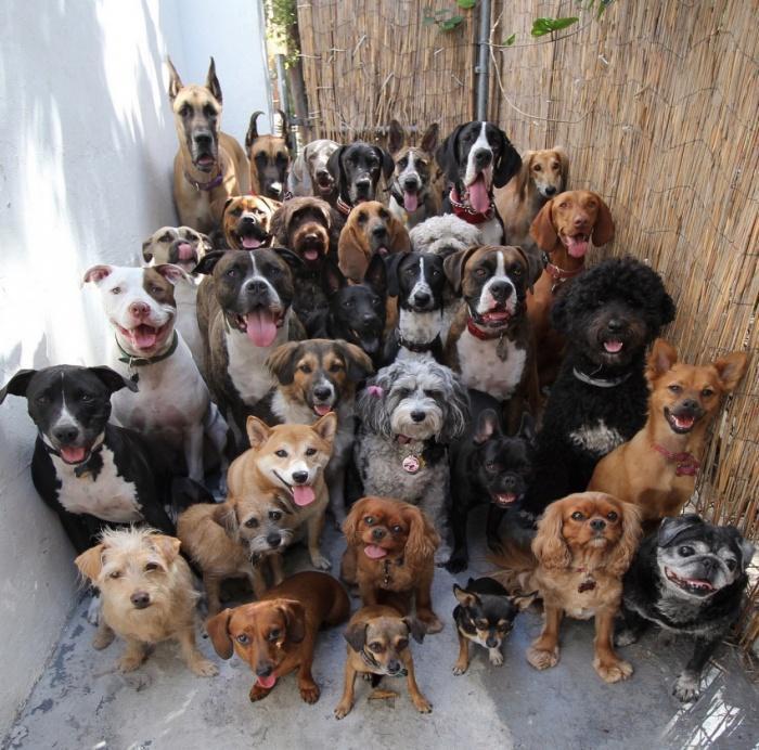 Фотография 33 собак