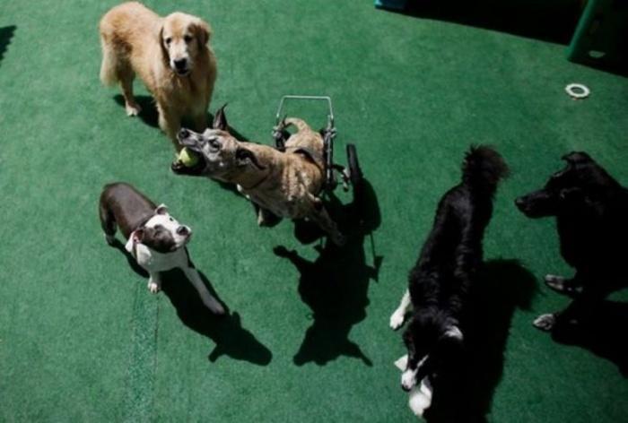 В «Dog Resort»   никакой дискриминации и полное равенство