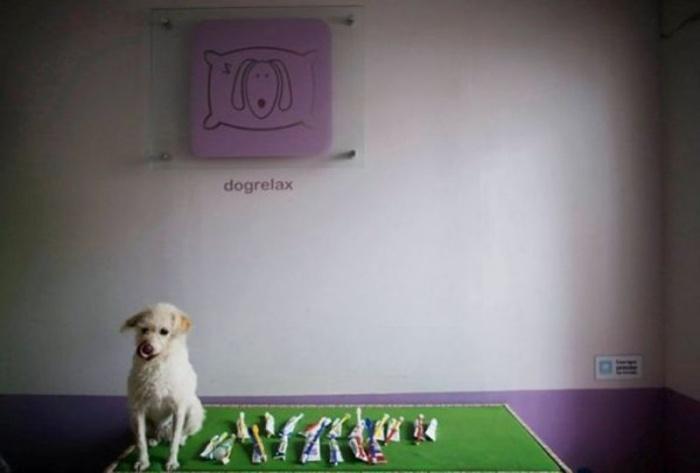 Собака и собачьи зубные щетки, используемыми в «детском саду»