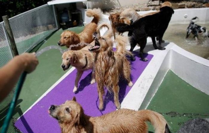 Собачек охлаждают после жаркого дня