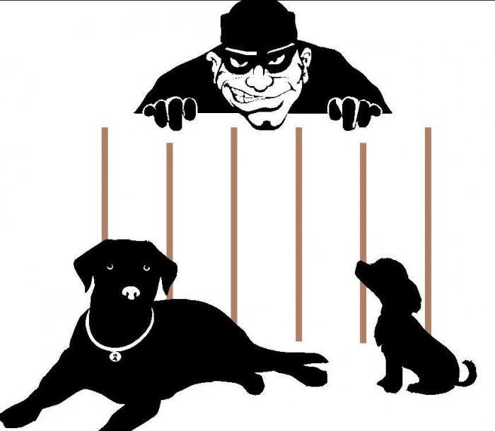 Кража собак