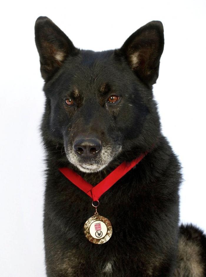 Собака Сако