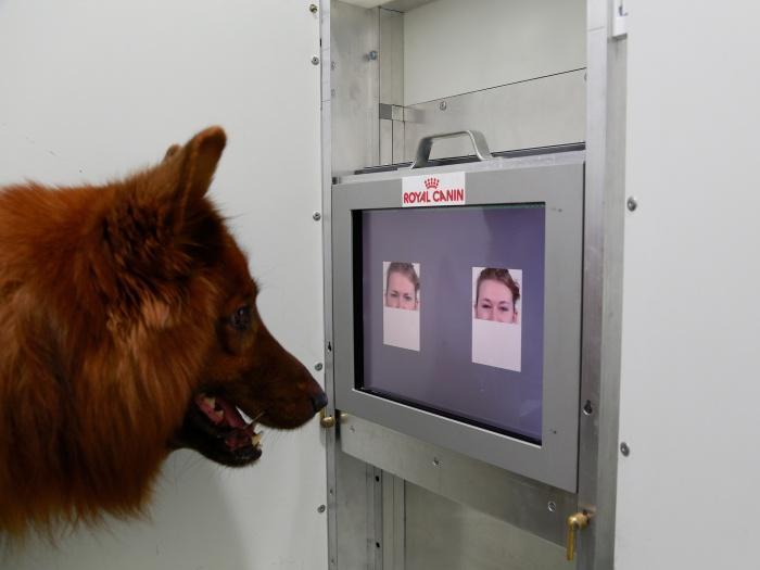 Собаки способны распознавать улыбку на лице человека