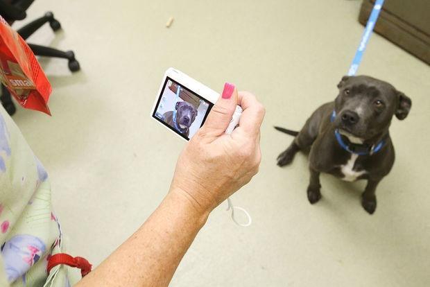 Новый подход к поиску пропавших собак