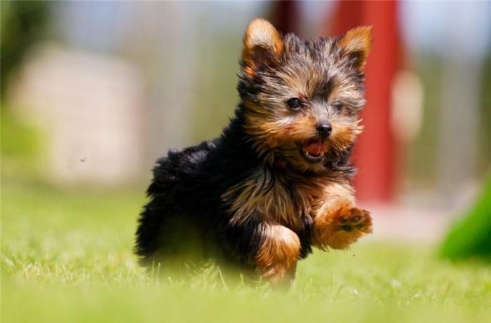 Почему маленькие собаки становятся все более популярными?