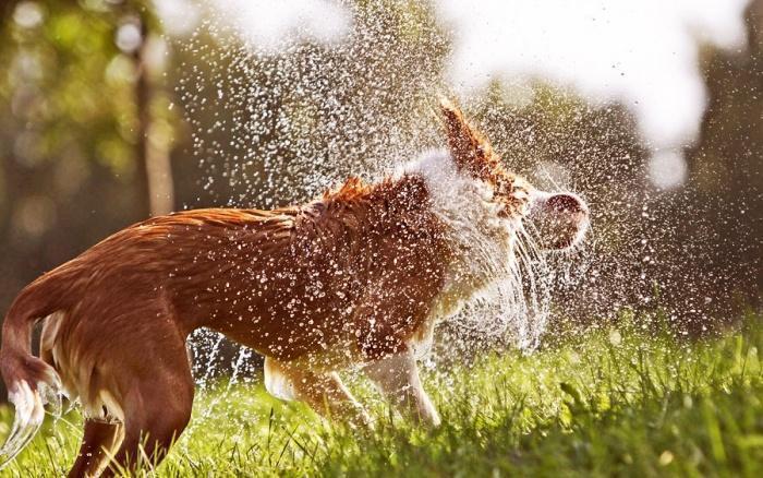 Почему мокрые собаки неприятно пахнут?