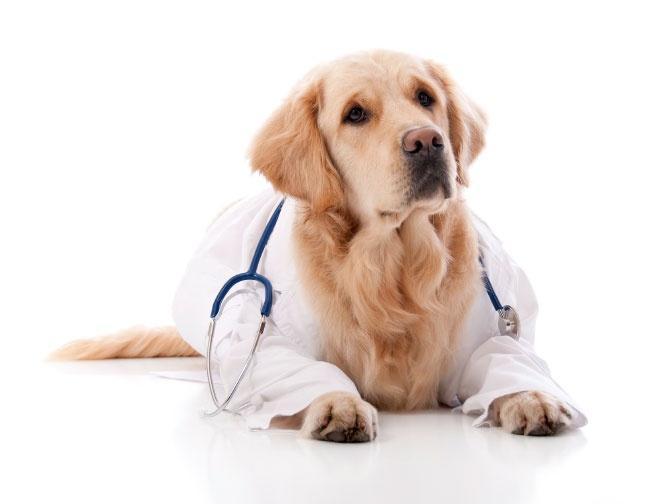 Собака-врач: в детской больнице начато применение пет-терапии