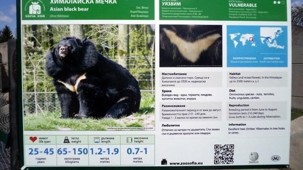 Домашние собаки оказались медведями
