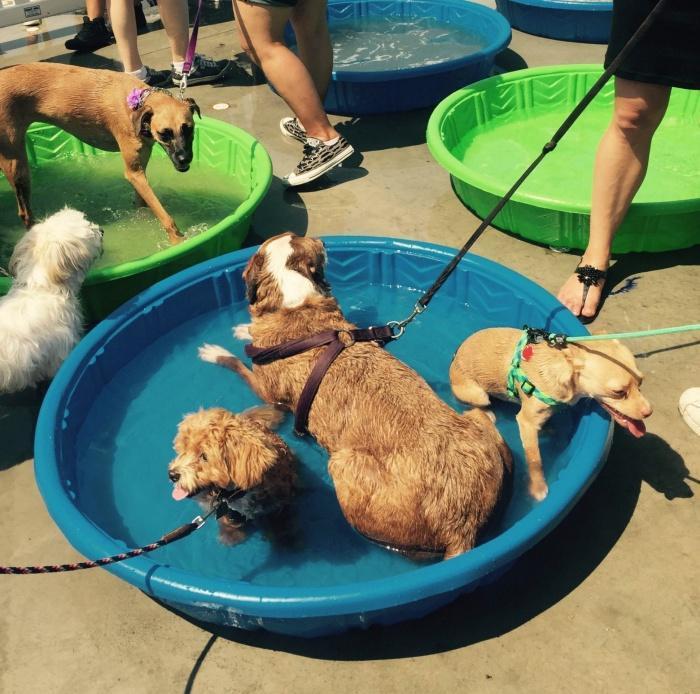 Лучшая летняя вечеринка для собак