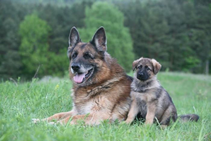 Правда о том, как собаки стареют
