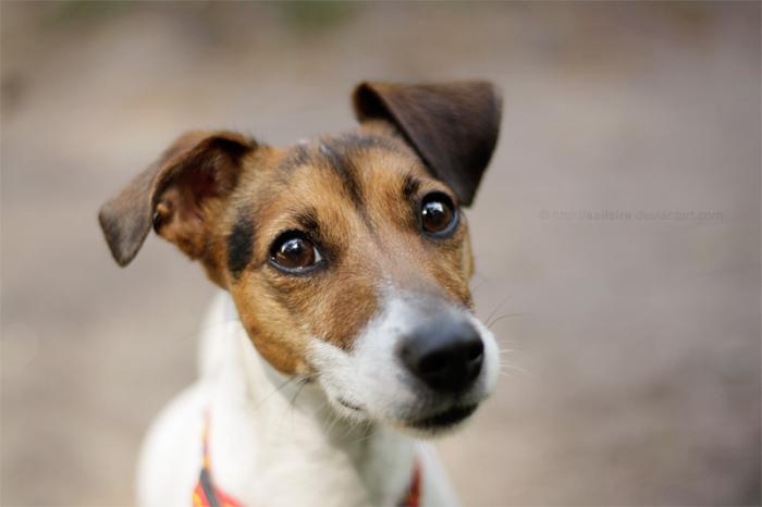 Почему ваша собака так рада вас видеть?