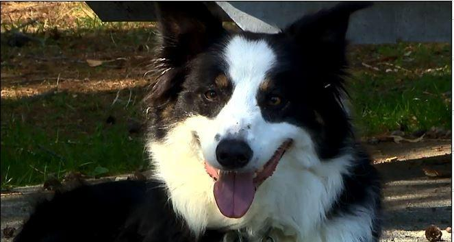 Ученые тестируют лекарство, продлевающее жизнь собак