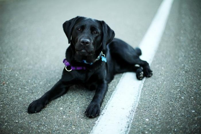 Собаки навещают пациентов в больнице в Алабаме