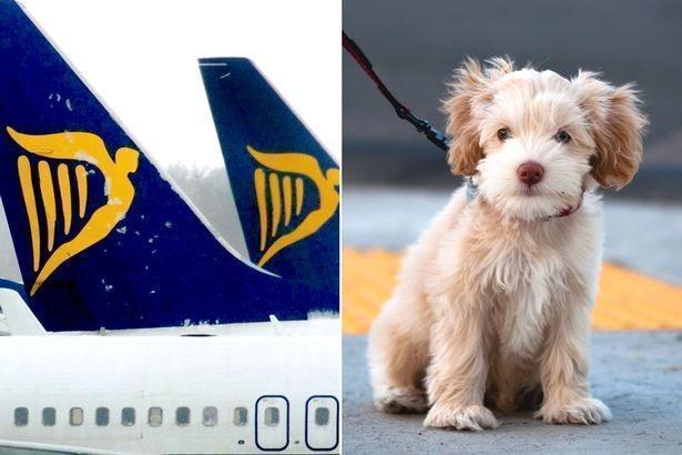 В скором времени хозяева смогут летать на Ryanair с питомцами