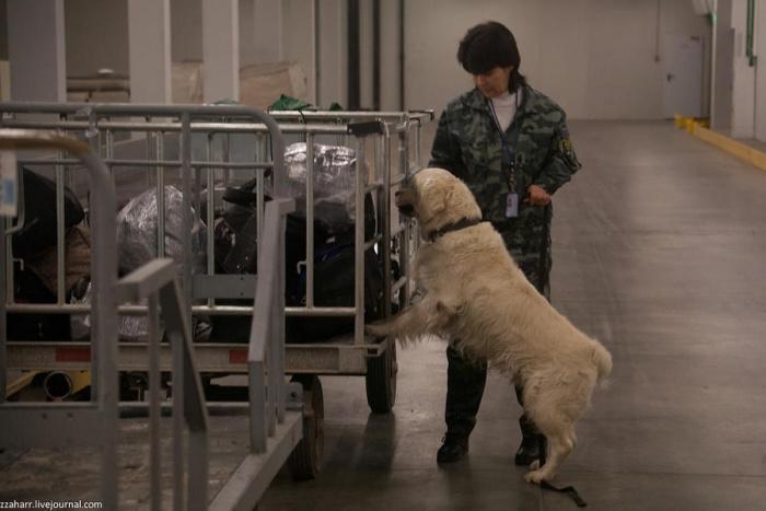 Собака обнаружила в чемодане беглеца