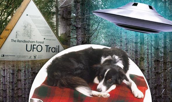 Собаки таинственно заболели после прогулки в известном месте приземления НЛО