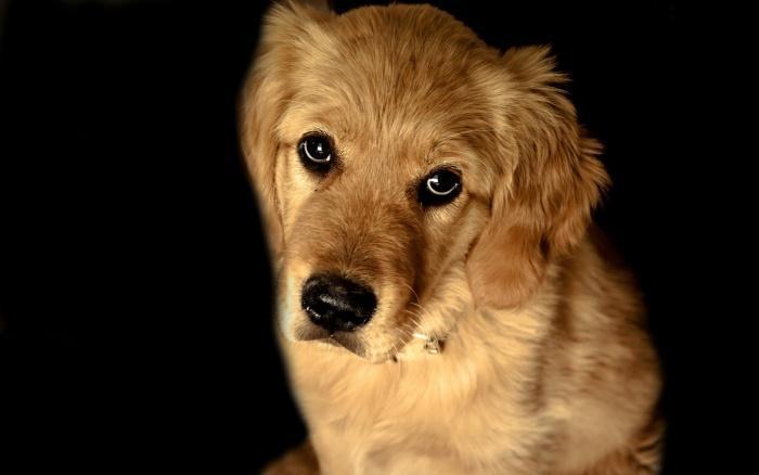 Оказывается, собаки чувствуют, если человек психопат