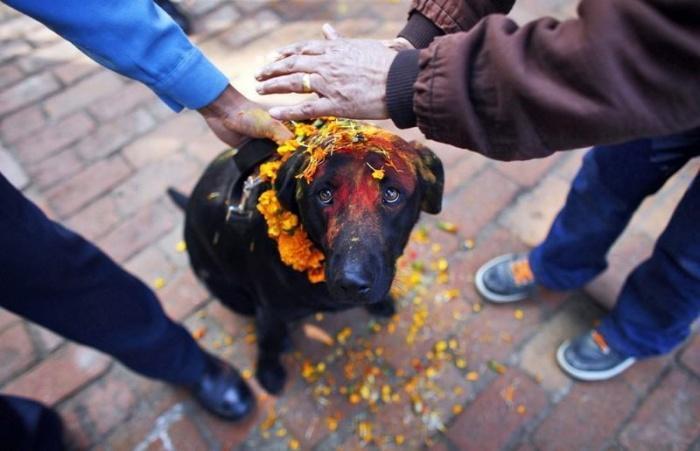 В Непале прошел день поклонения собакам