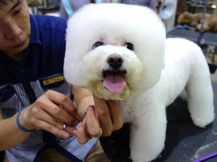 Владельцы собак в Тайване создали для своих питомцев особый стиль