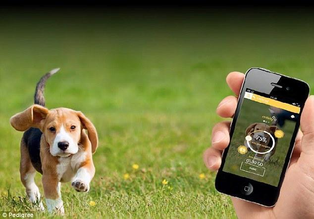 Появилось приложение «My Fitness Pal» для собак