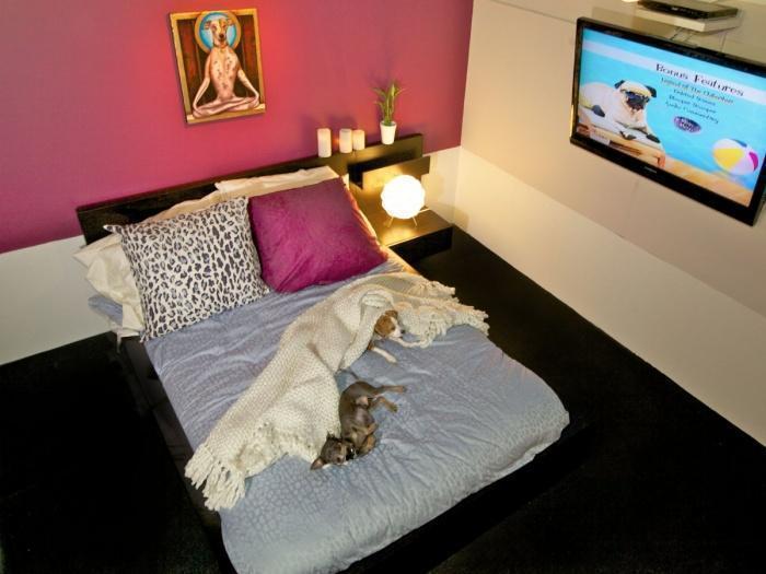 Номера в отеле для собак в Нью-Йорке больше, чем некоторые квартиры на Манхеттене