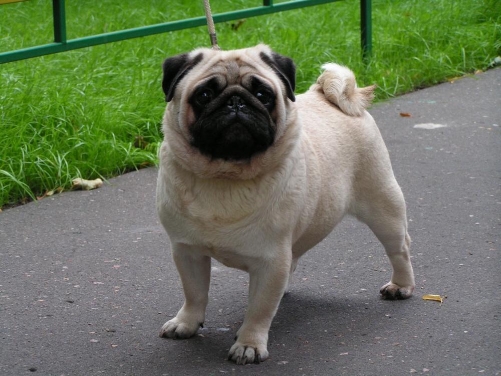 породы собак по знаком зодиака хозяина