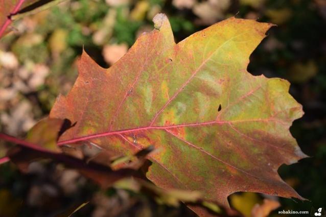 Краски осени 2015