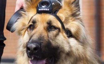 Видеокамеры на полицейских собаках