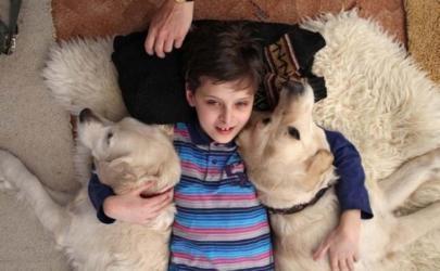 Помощь собак в реабилитации детей с неврологическими заболеваниями
