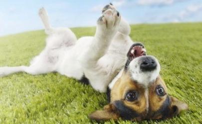 Как уберечь свою собаку от пироплазмоза