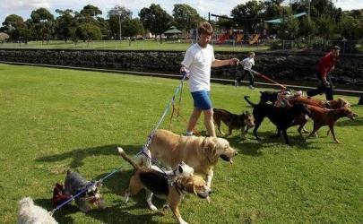 Бизнес по оказанию услуг по выгулу собак