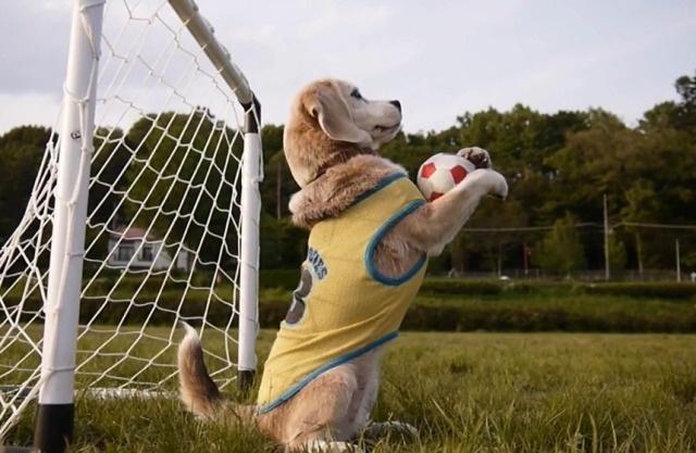 Обучение собак основным командам