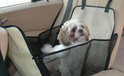 Как перевозить собаку в автомобиле?