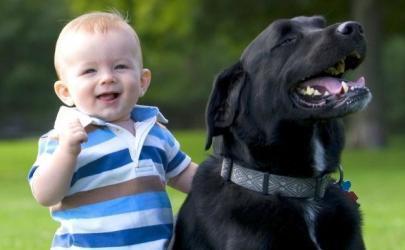 Проблема: собаки и дети