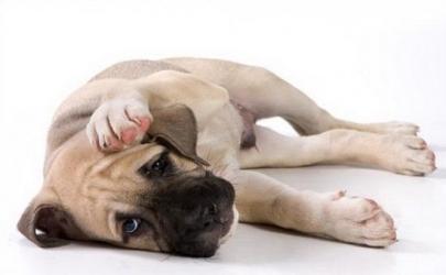 Отравления у собак и кошек